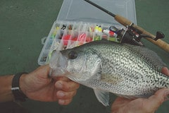 Man shows off his crappie with his fly box in the background
