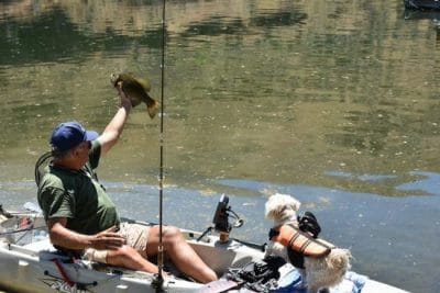 Man pulls a crappie out of the water as he kayak fishes