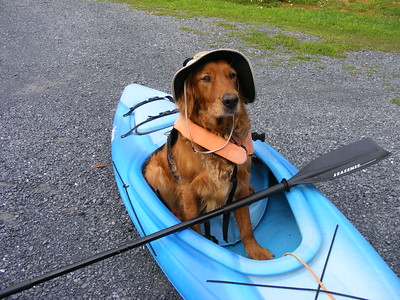 A golden retriever wearing a floppy sunhat sits in the cockpit of a blue kayak on a road looking unamused