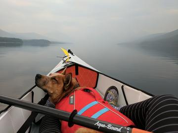 A cute pup wearing a doggy life vest snoozes while his head is resting on the bow of the kayak